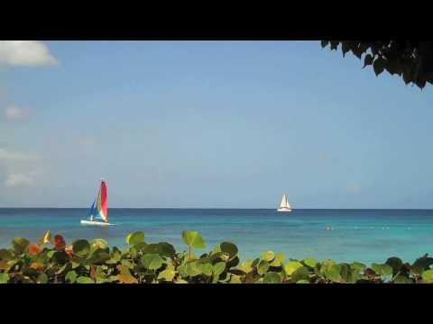 Seagrapes and the sea, Barbados