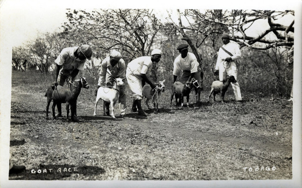 Goat Race, Tobago by Striderv via Flickr