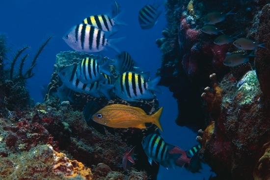 Deal of the Week: Explore Montserrat Scuba Diving Adventure