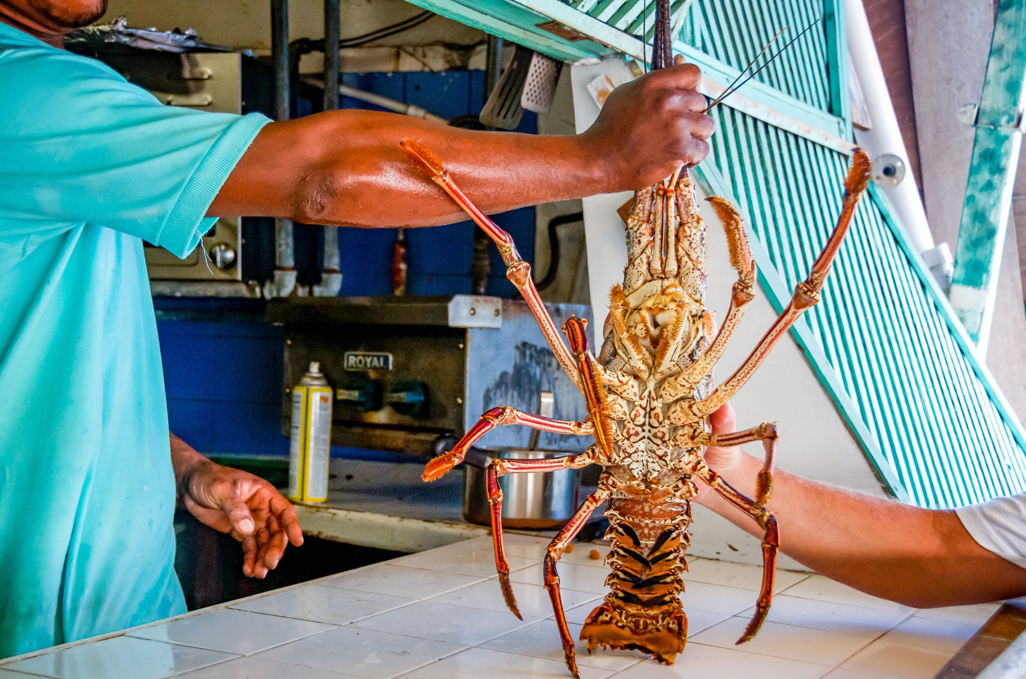 Spiny Lobster Caribbean Style—Not Your Average Maine Lobster