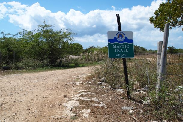 Mastic Trail Grand Cayman: Hiking With the Curious Animals