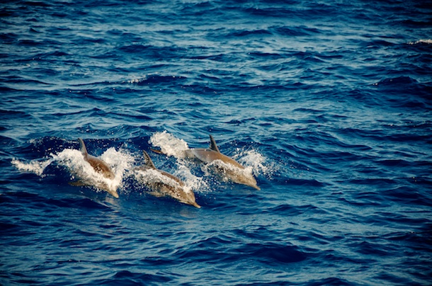 Our dolphin Friends by Patrick Bennett
