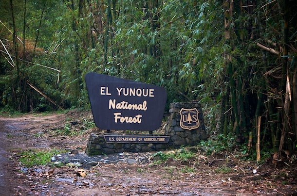 El yunque national forest puerto rico 1