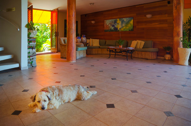 Scooby AT THE VELERO BEACH RESORT, CABARETE BY PATRICK BENNETT