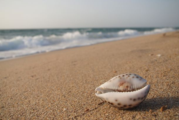Slavery Cowry Shells And Other History Lessons At The