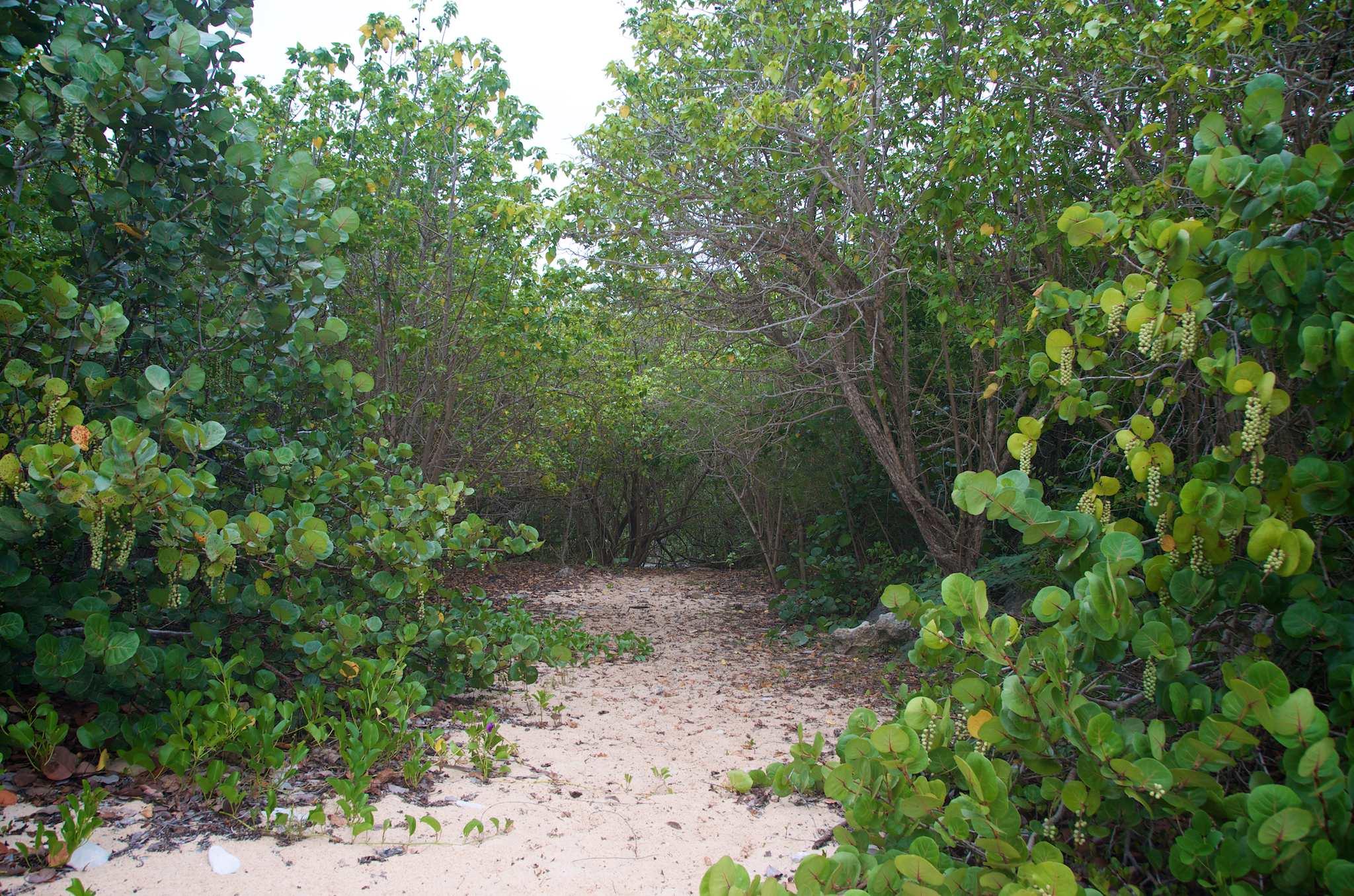 Iguana Cave Anguilla: Hiking to Another Caribbean Misnomer