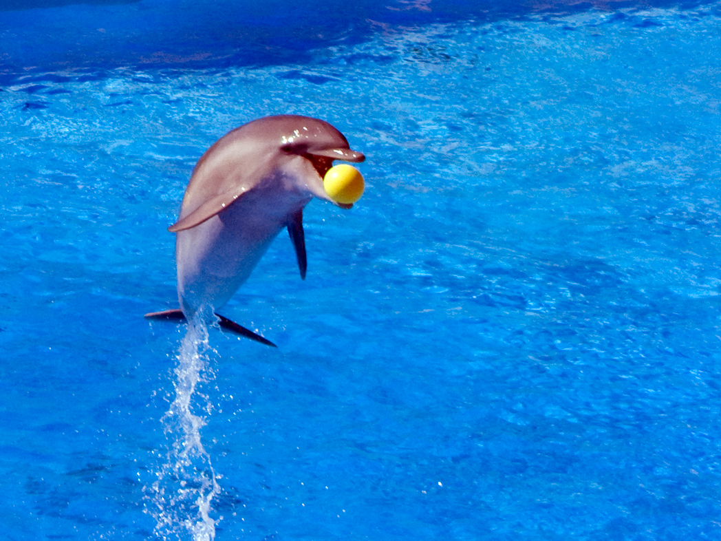 Eating Dolphin: A Primer for the Uninitiated