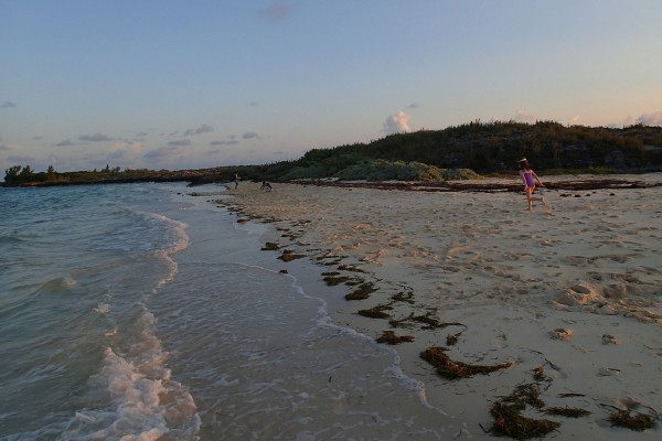 Running wild on Gun Cay | Credit: SBPR