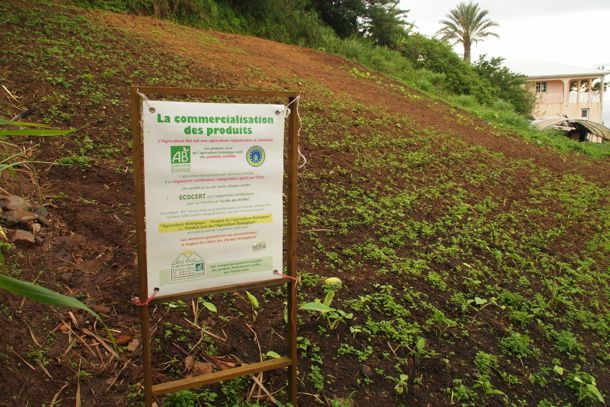 Hillside farming at Le Hameau du Morne des Cadets | SBPR