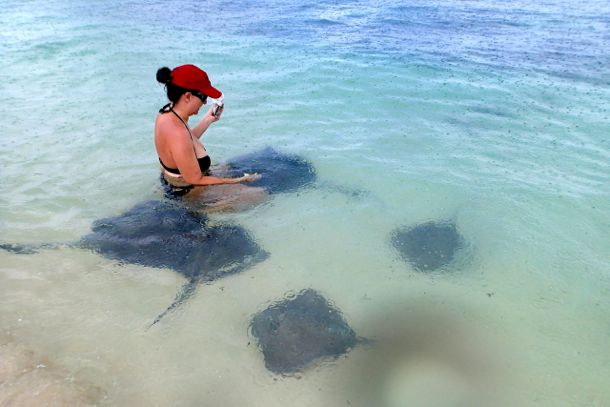 Leann feeding her stingray friends | Credit: Kelly Bennett