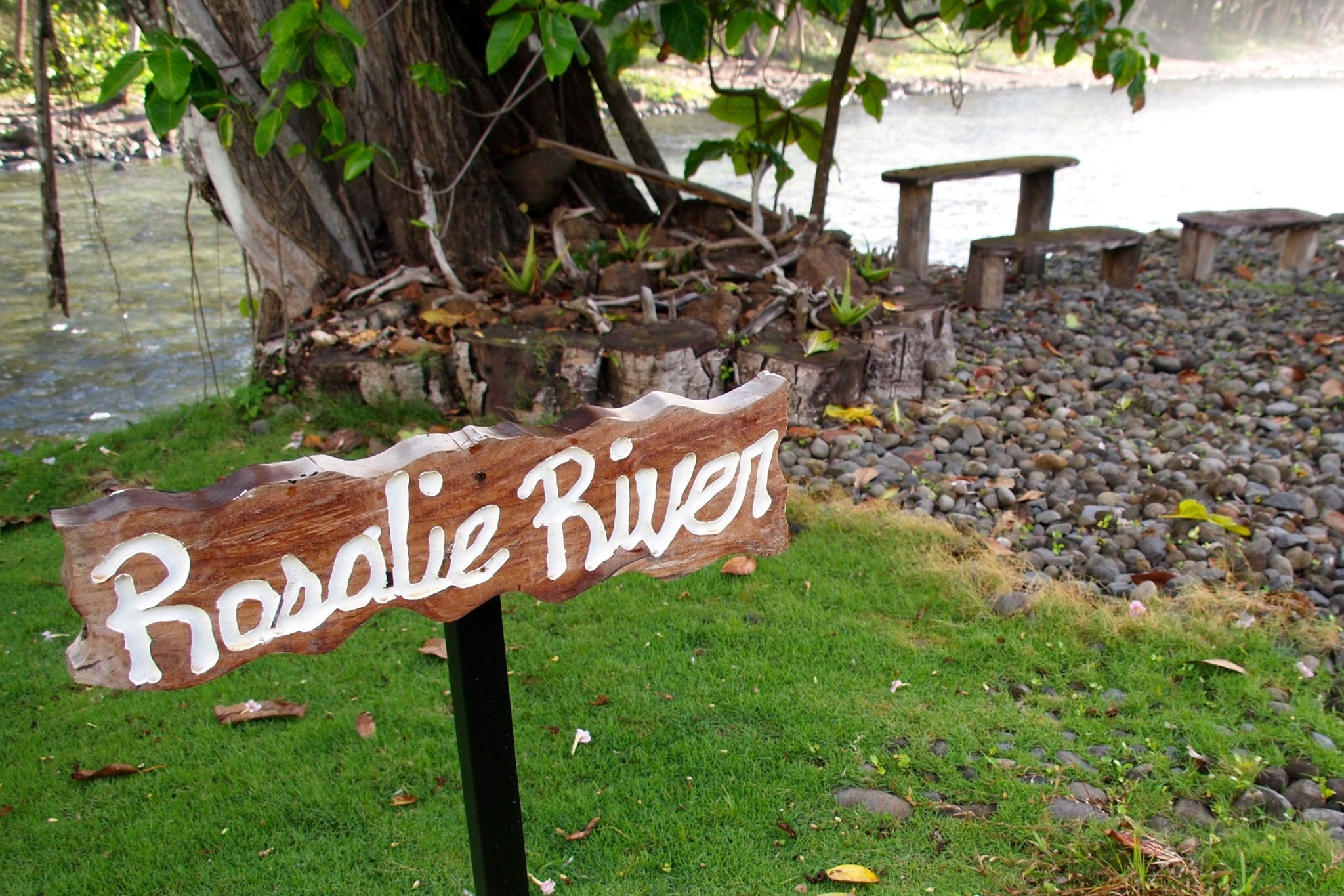 Sights and Sounds of the Morning Along The Rosalie River, Dominica