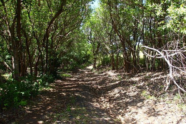 Into the Bush at Bequia Head | SBPR