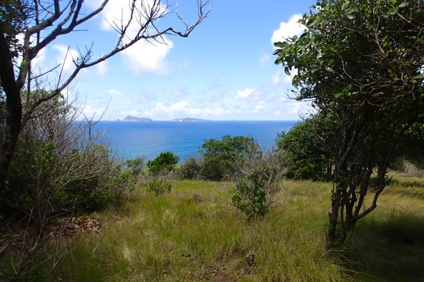 Peeking through the trees on the trail to Bequia Head | SBPR