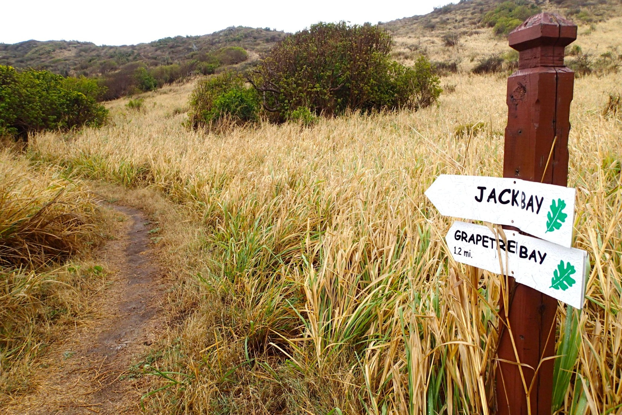 On-Site St. Croix: One Rainy Morning Hiking the Jack and Isaac Bay Preserve, Part III