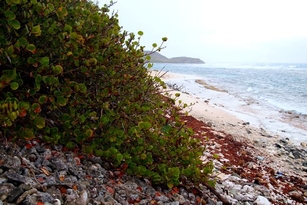 Far Western Edge of Jack's Bay, St. Croix | SBPR