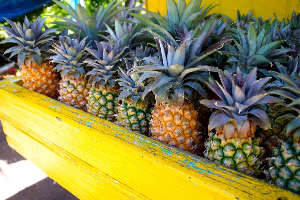Antigua Black Pineapples | SBPR