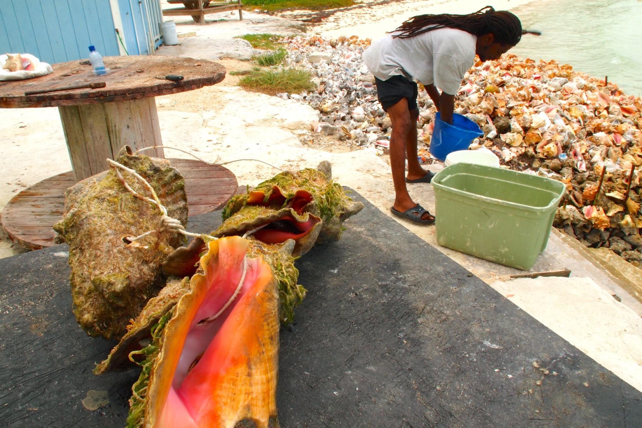 Conch Pistol aka Bahamian Viagra – My First Not-So-Sexy Taste