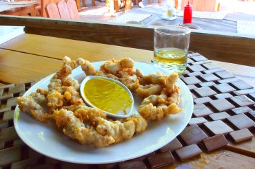 Gator Tail at Bugaloo's in Provo | SBPR