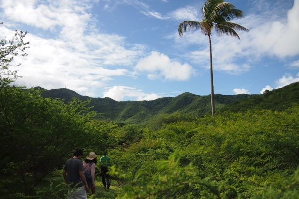Beautiful scenery on the hike from Sugar Ridge to Bolans, Antigua | SBPR