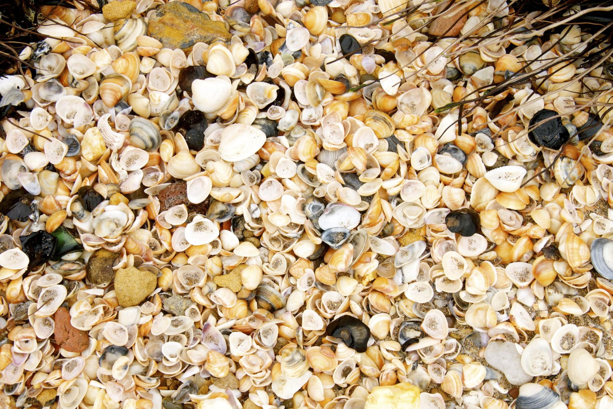Sea Shells Along Manzanilla Beach, Trinidad: Photo of the Day