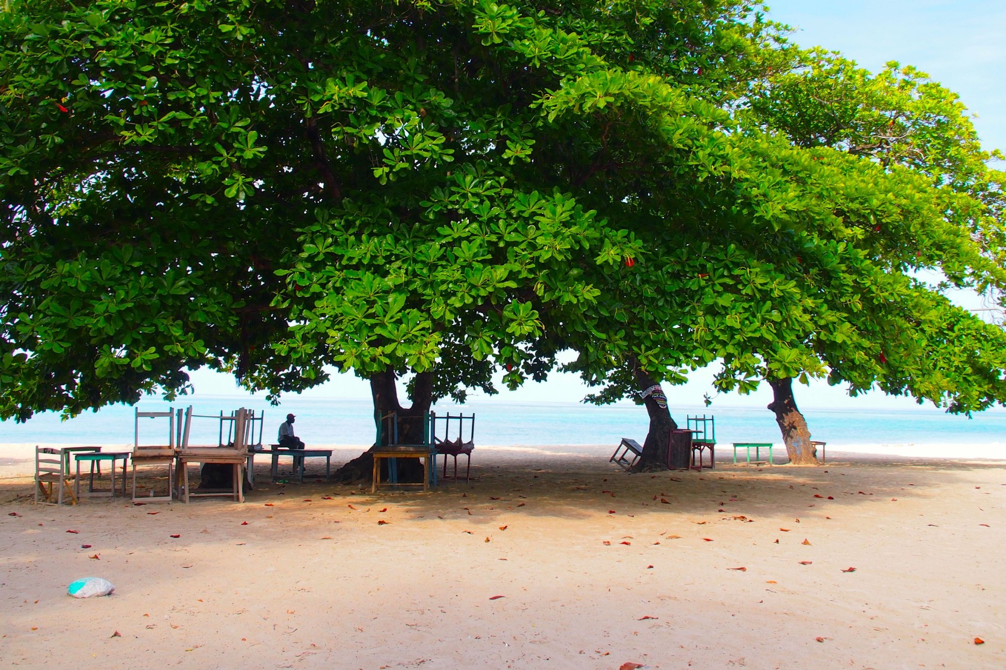 Catching Some Shade in Southern Haiti: Wish You Were Here