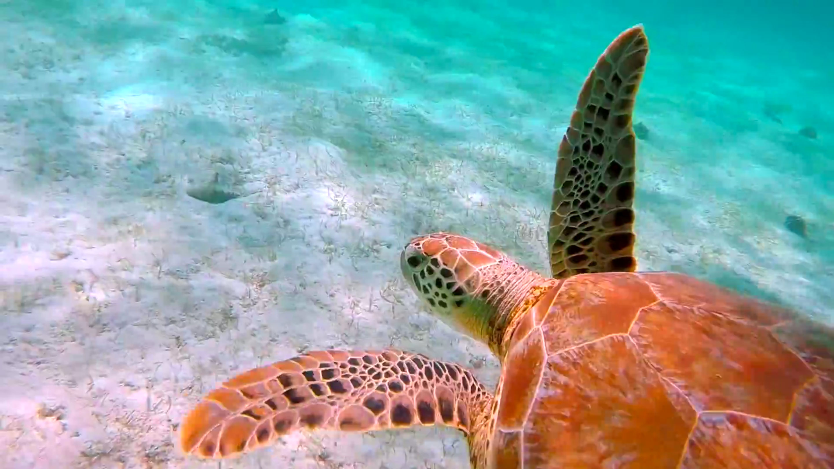 Saturday Video Snorkeling With Turtles In The Trippy