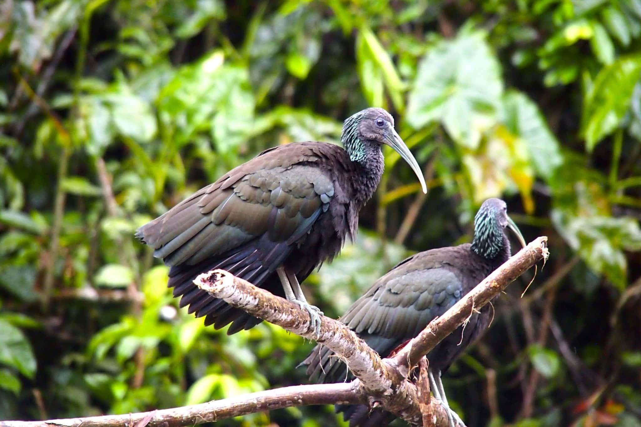 Uncommon Photo-Op: Wildlife Safari in Tortuguero, Costa Rica
