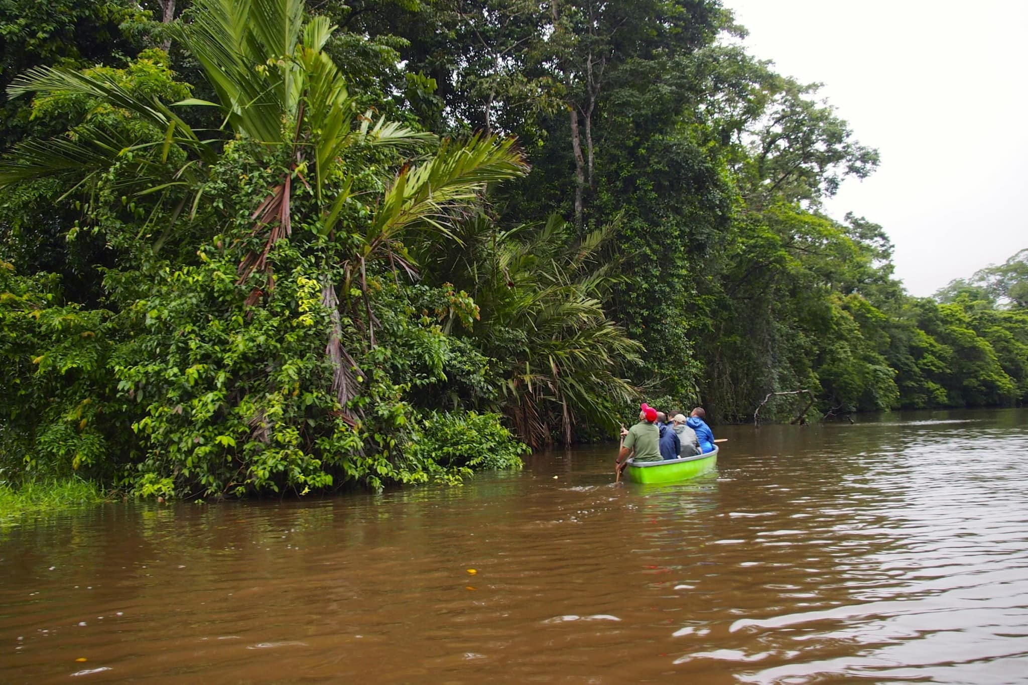 Touring Costa Rica's Tortuguero National Forest by Canoe