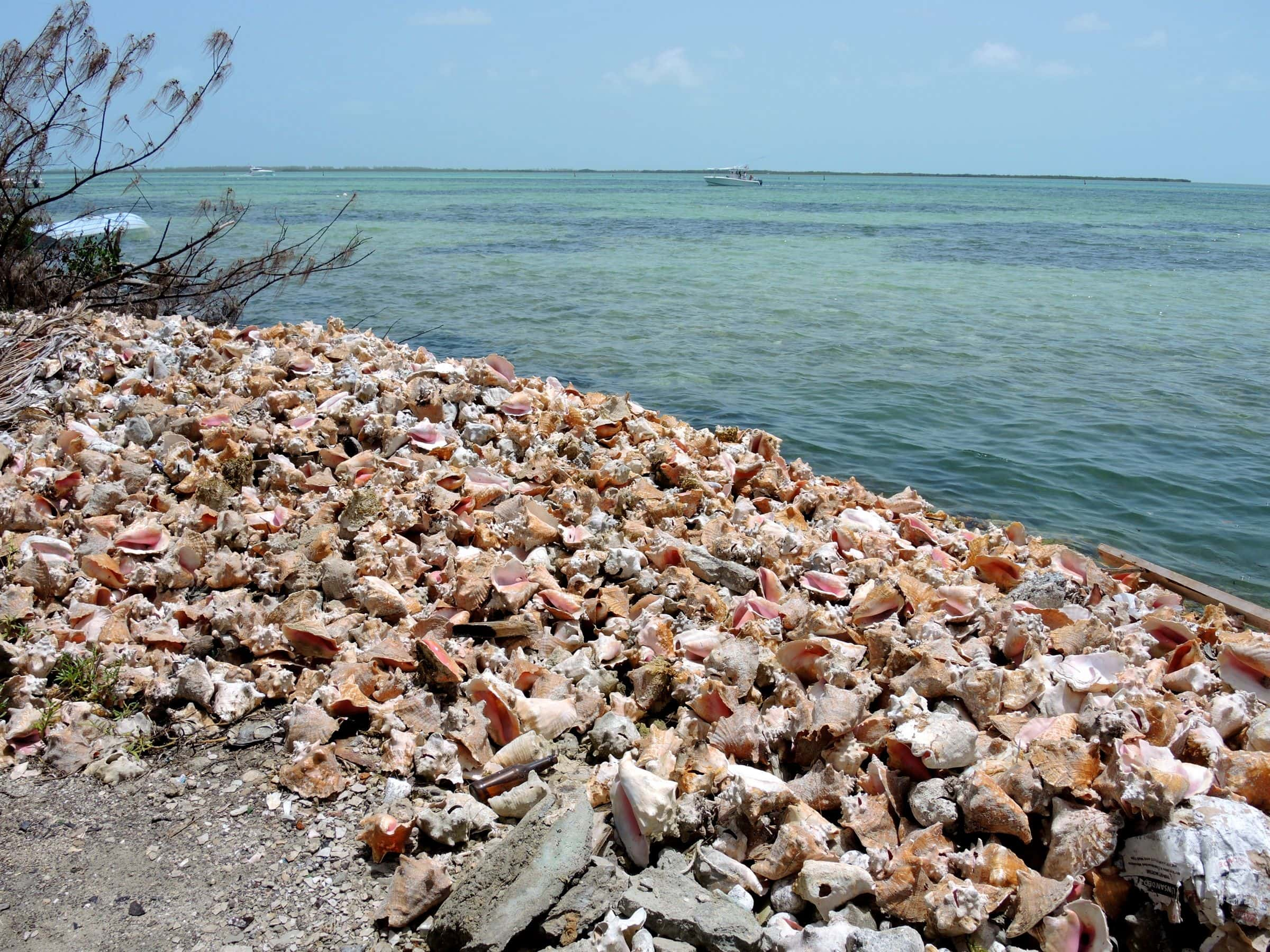 Jamaica Defence Force Mum On Internal Review Of Coke Raid moreover Watch besides On Site Bahamas Where To Find The Best Conch Salad In Bimini also Playa Del Carmen Resorts besides Hurghada. on trinidad and tobago resorts