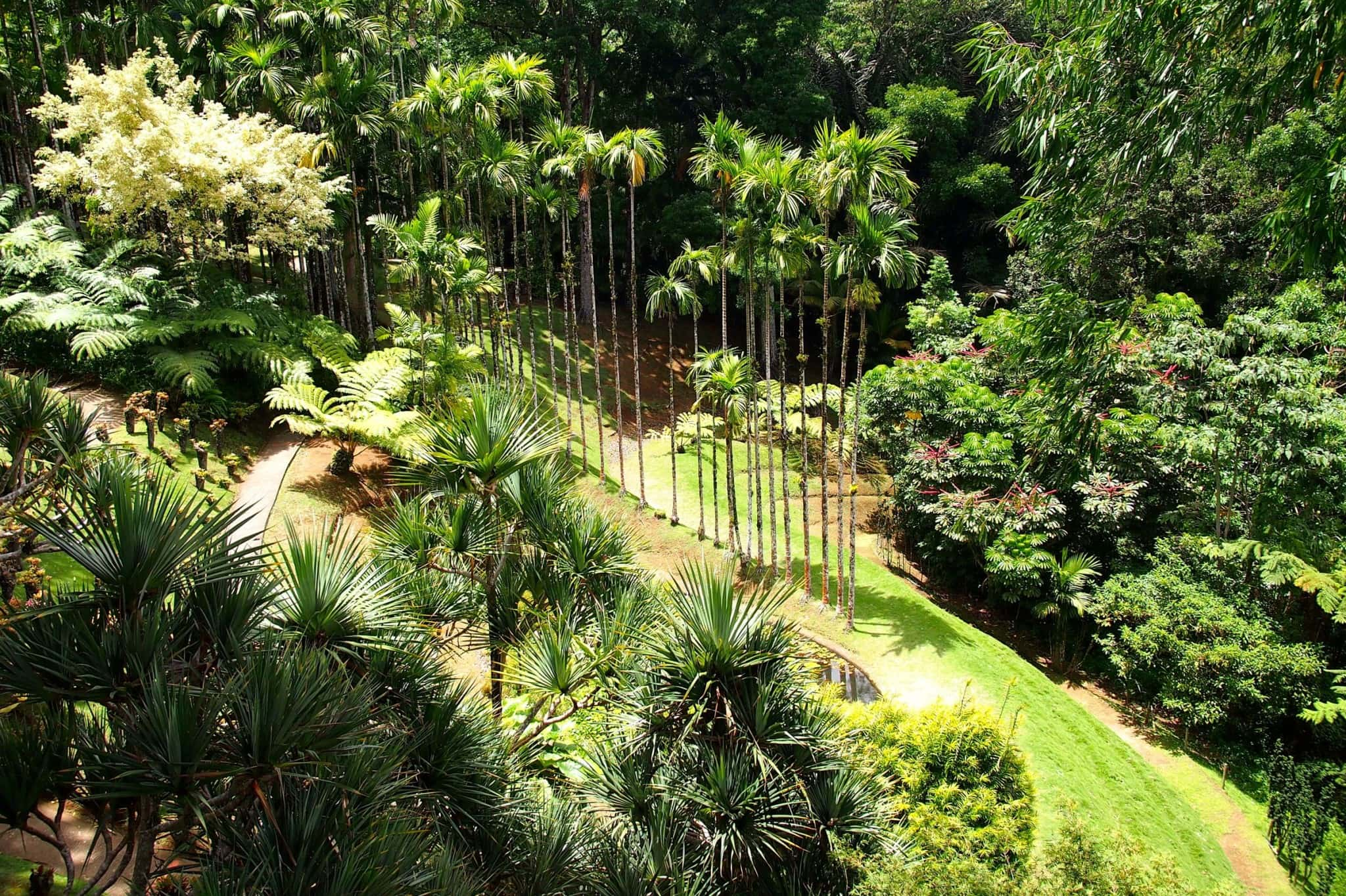 A Walk Along The Tree Tops in Martinique