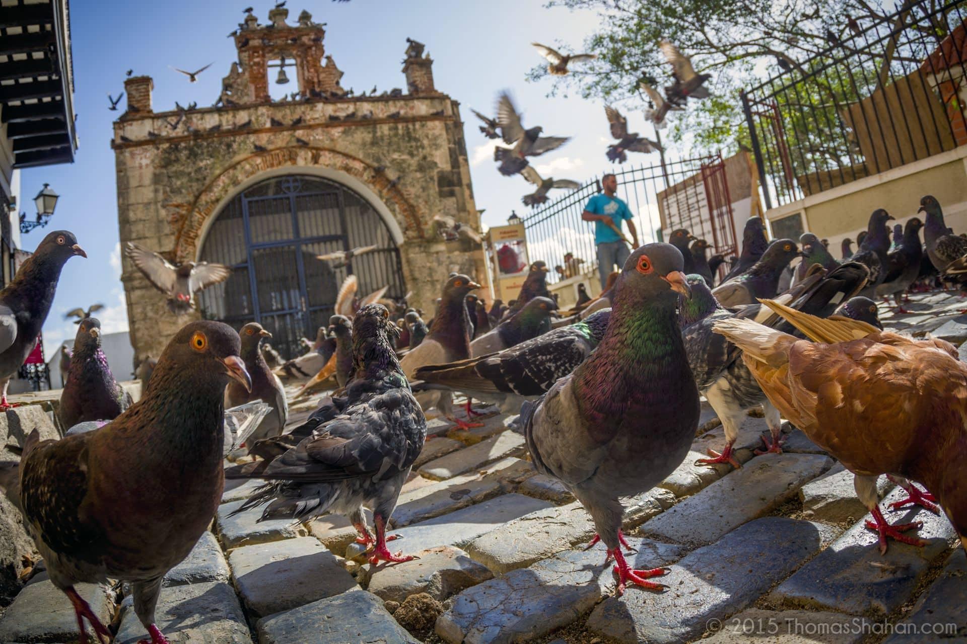 Plaza De Las Palomas, Puerto Rico: Photo of the Day