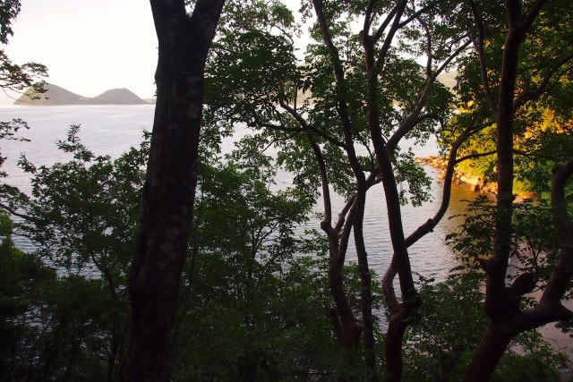 View Through the trees from my bungalow at Secret Bay, Dominica | SBPR
