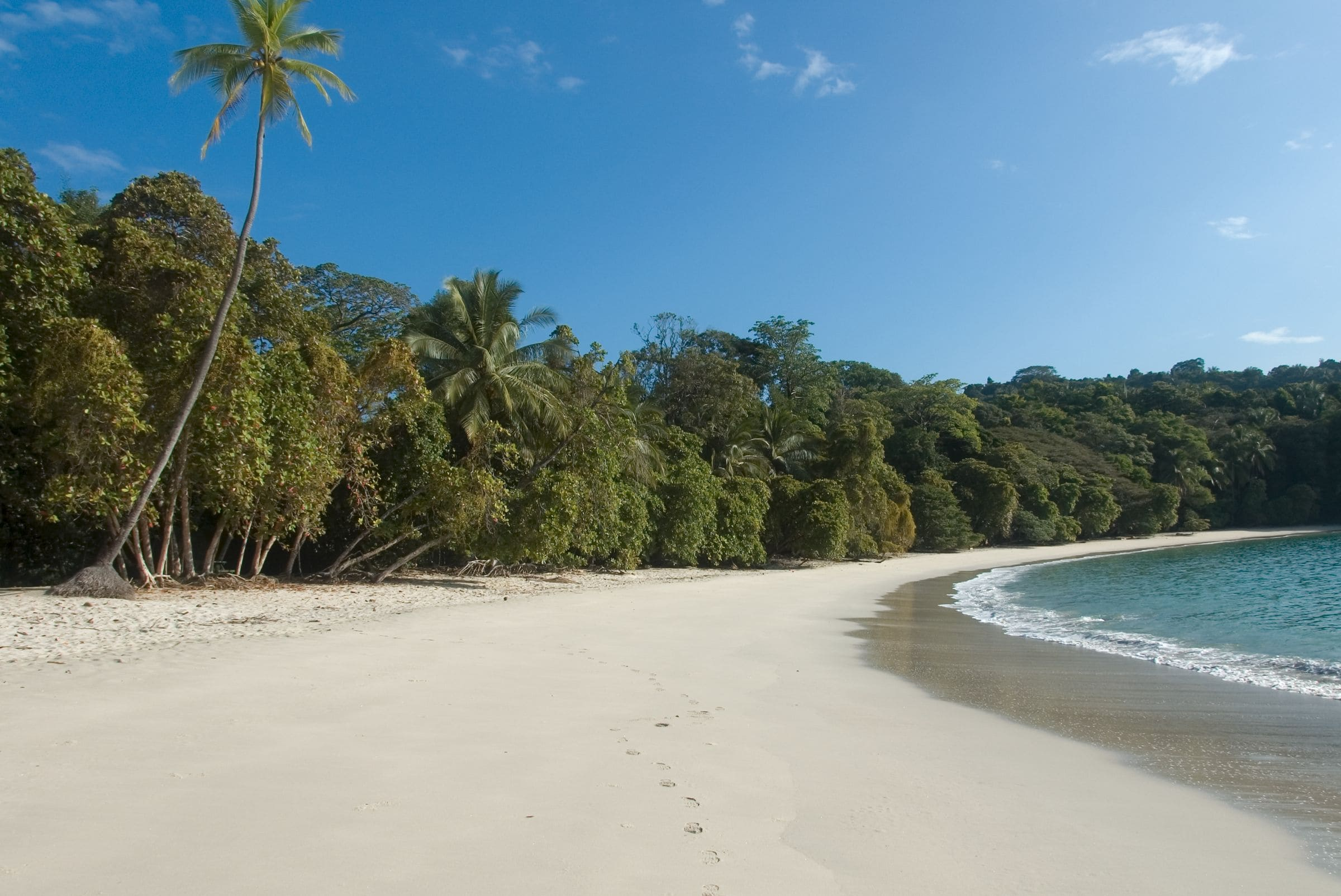 Going Wild On The Beaches Of Manuel Antonio Costa Rica Costa Rica