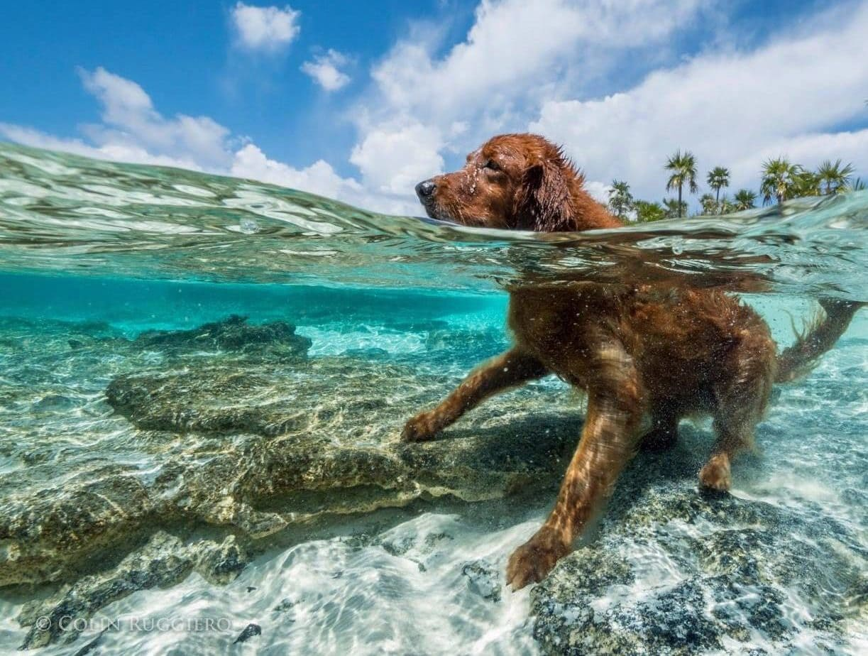 Delighting In A Dog's Life at Staniel Cay, The Bahamas