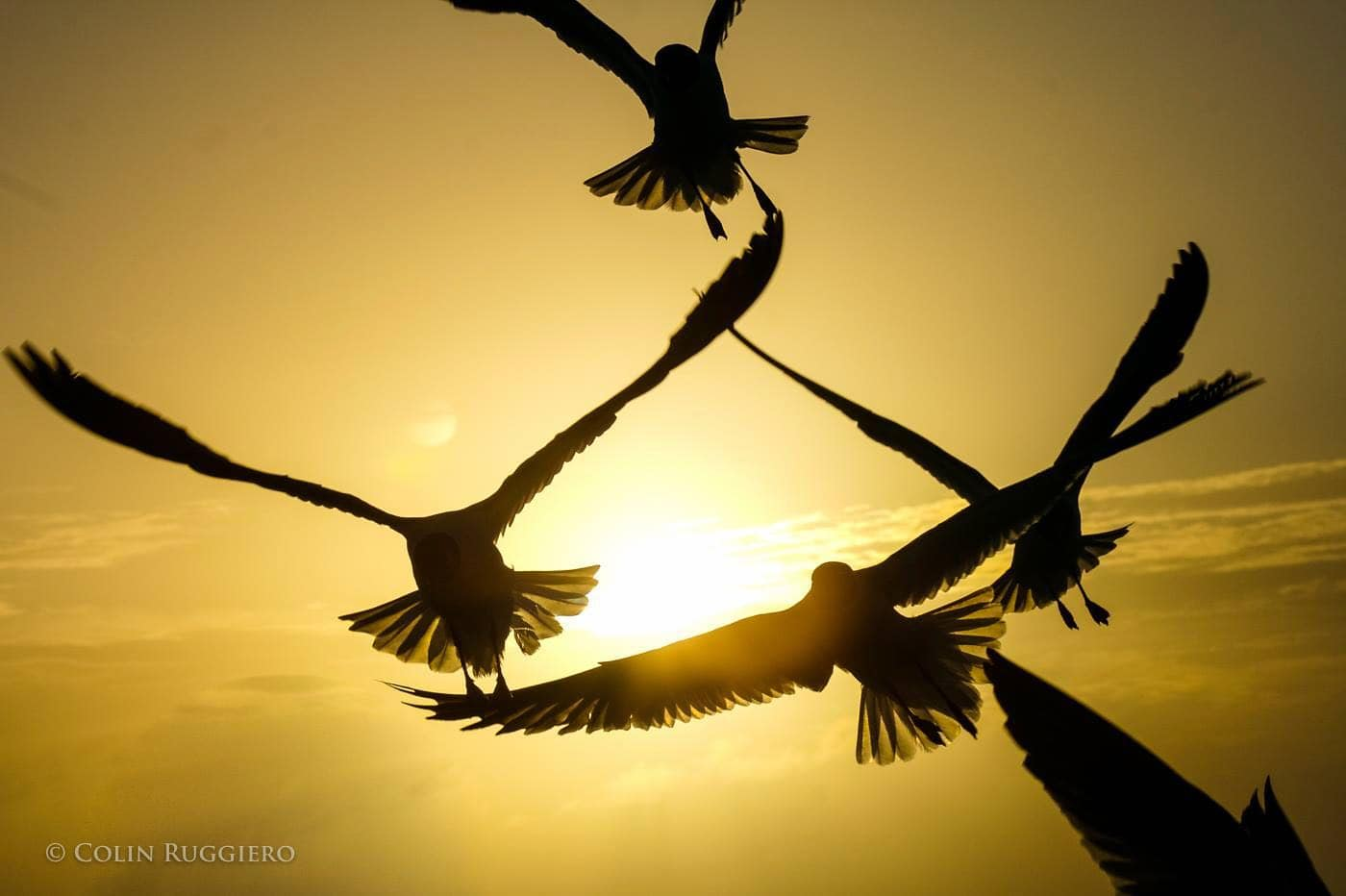 Seagulls at Sunset – A Sign of Peace in Exuma, The Bahamas