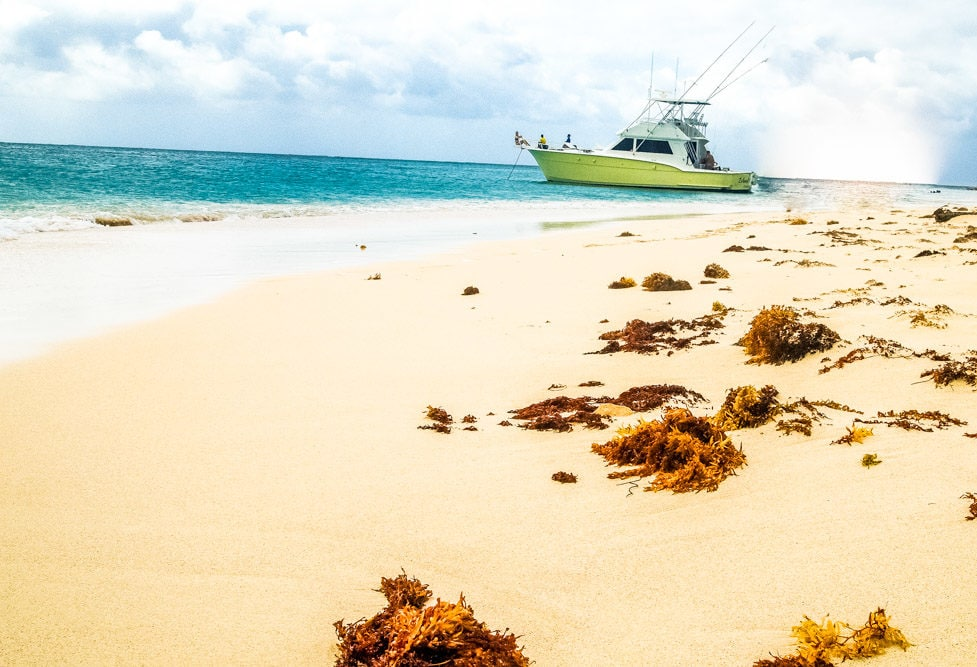 Beached At Buck Island, St. Croix