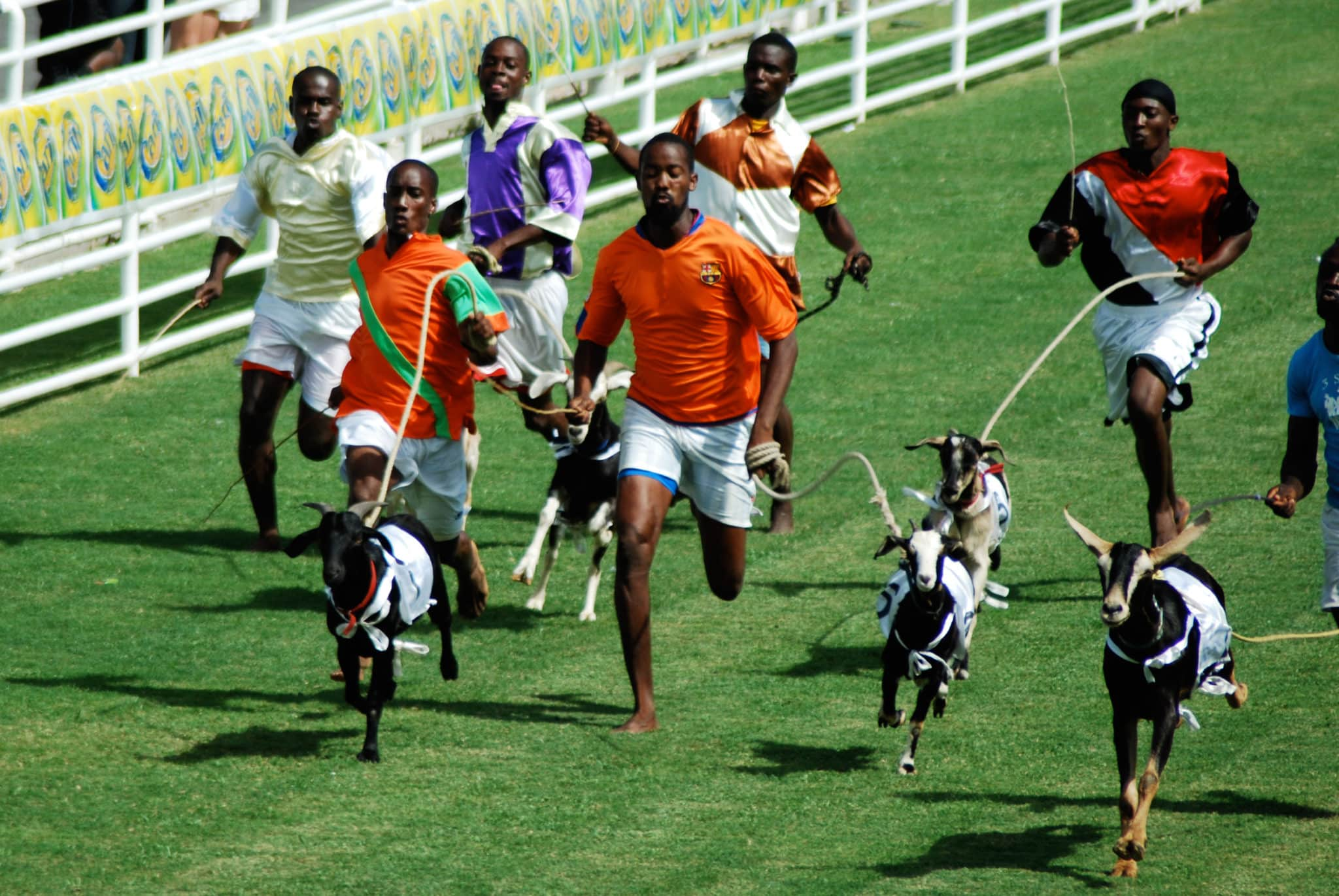 Enjoy A 'Taste' of Goat Races Day in Tobago