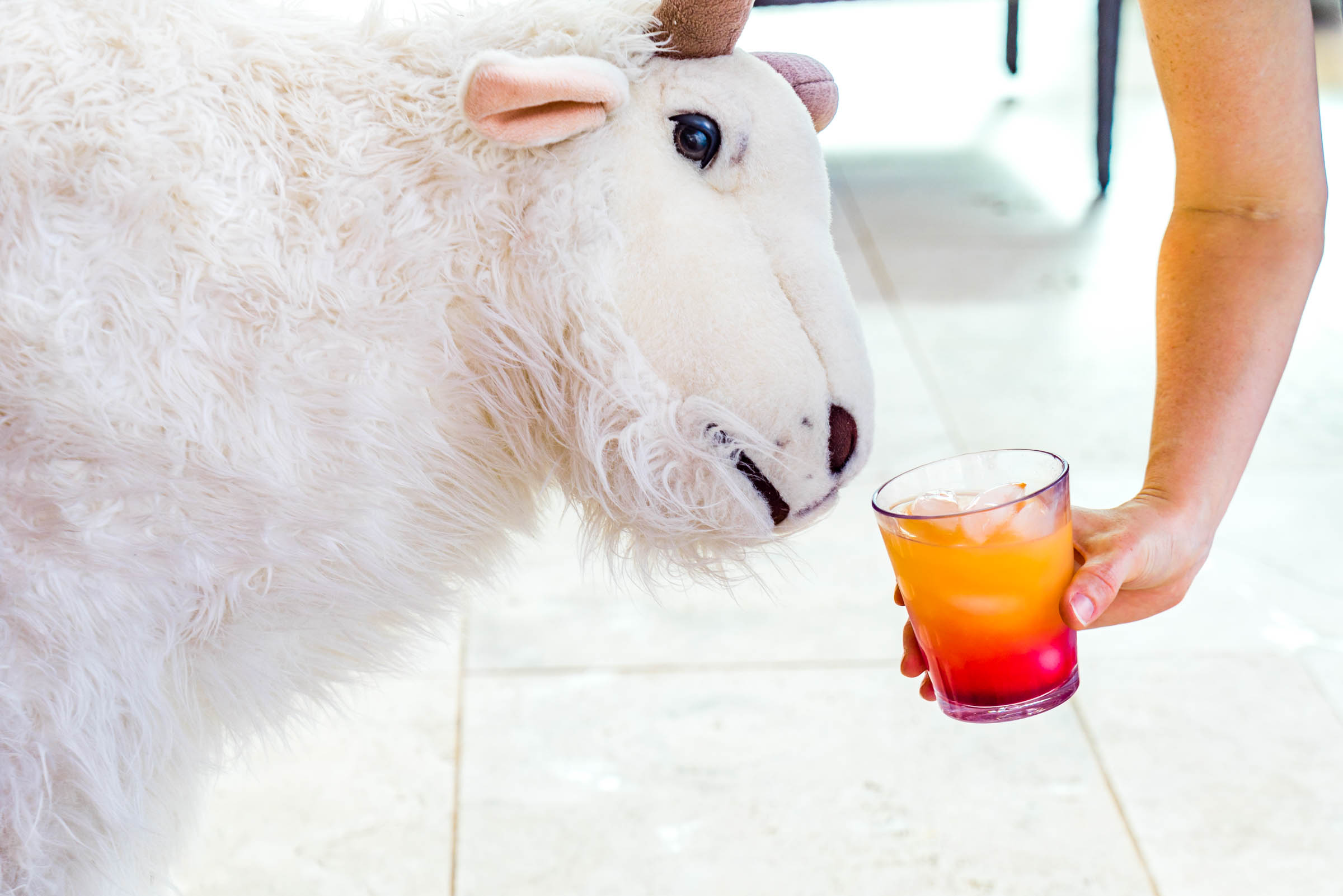 Oh... And there's a goat plus unlimited tequila.