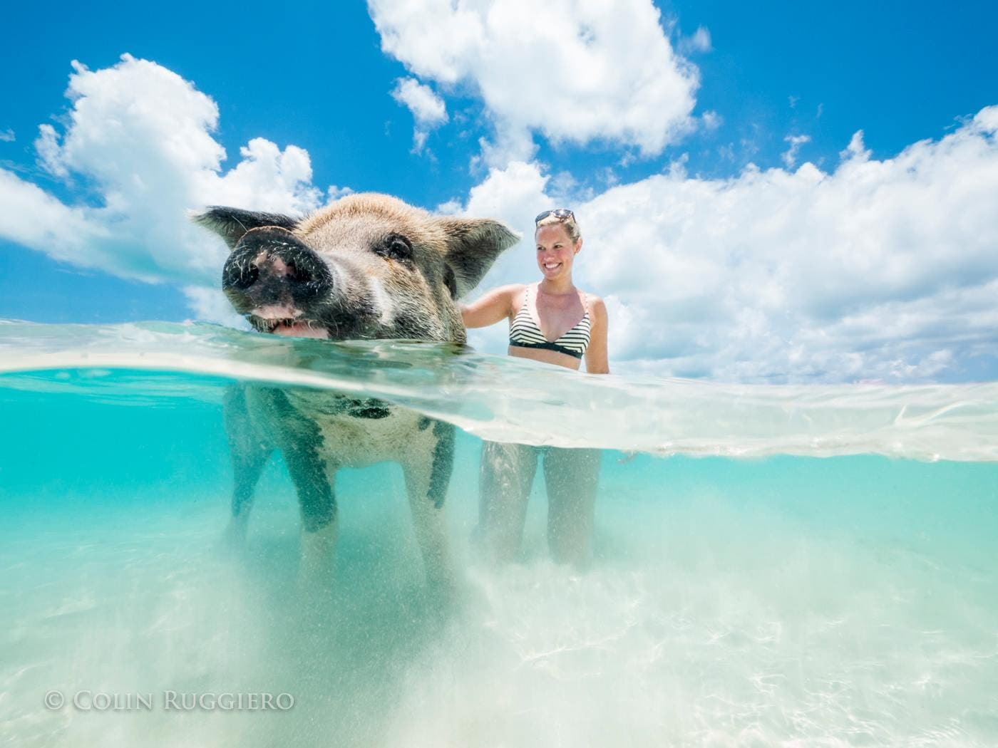 Mingling With The Locals On Pig Beach, Exuma