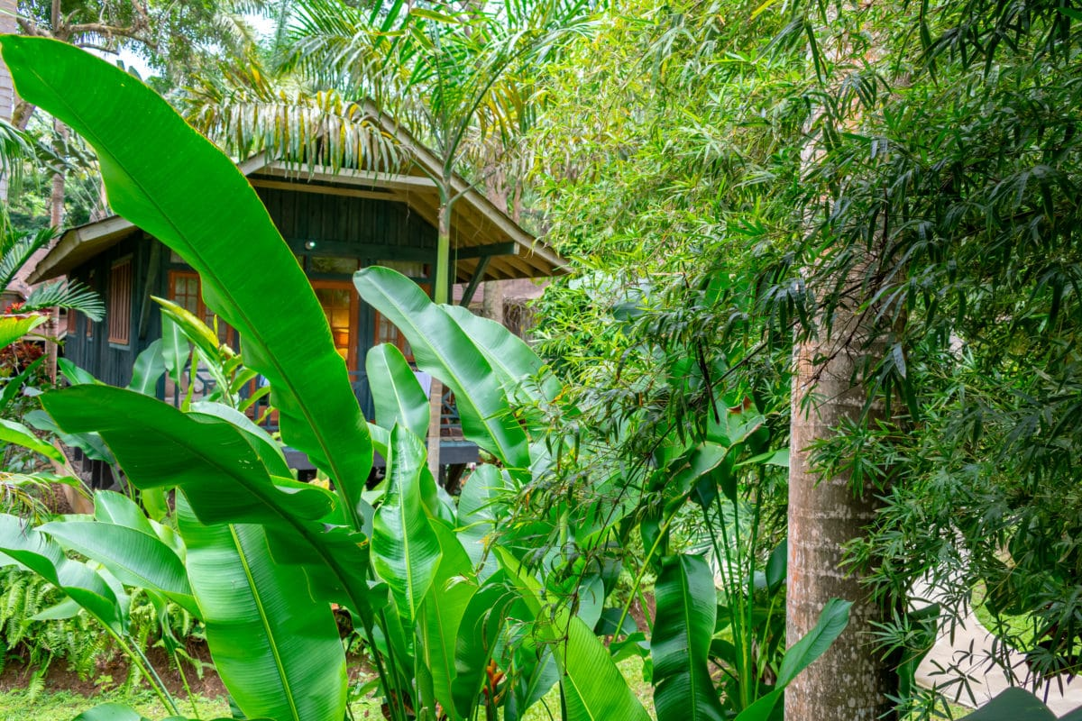 Natural privacy at Sunset At The Palms, Negril | SBPR