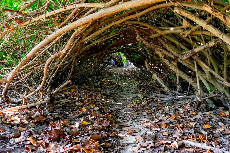 Tunnel Of Love To Shoys Beach, St. Croix | St. Croix, U.S. Virgin Islands