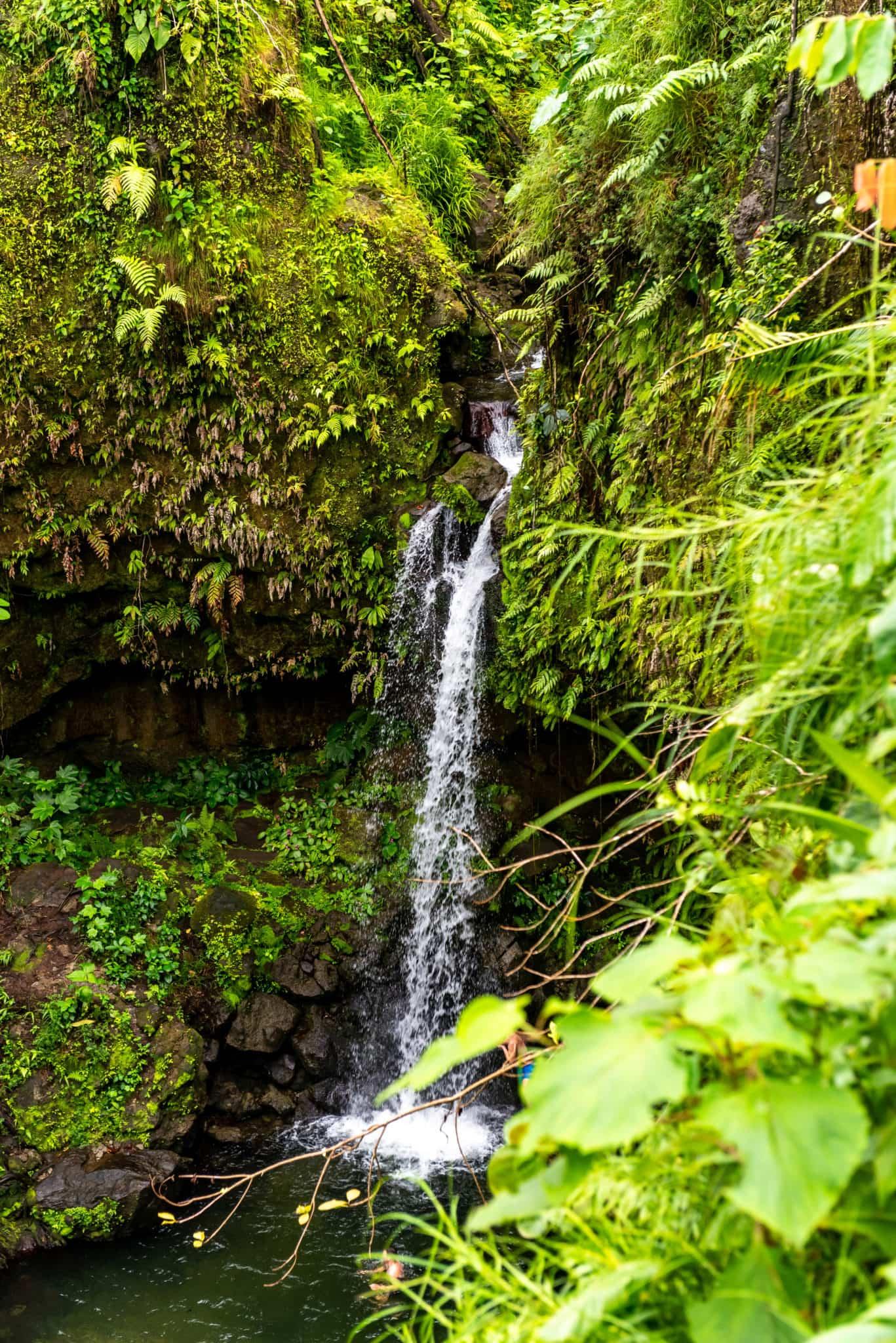 Emerald Pool Waterfall Dominica