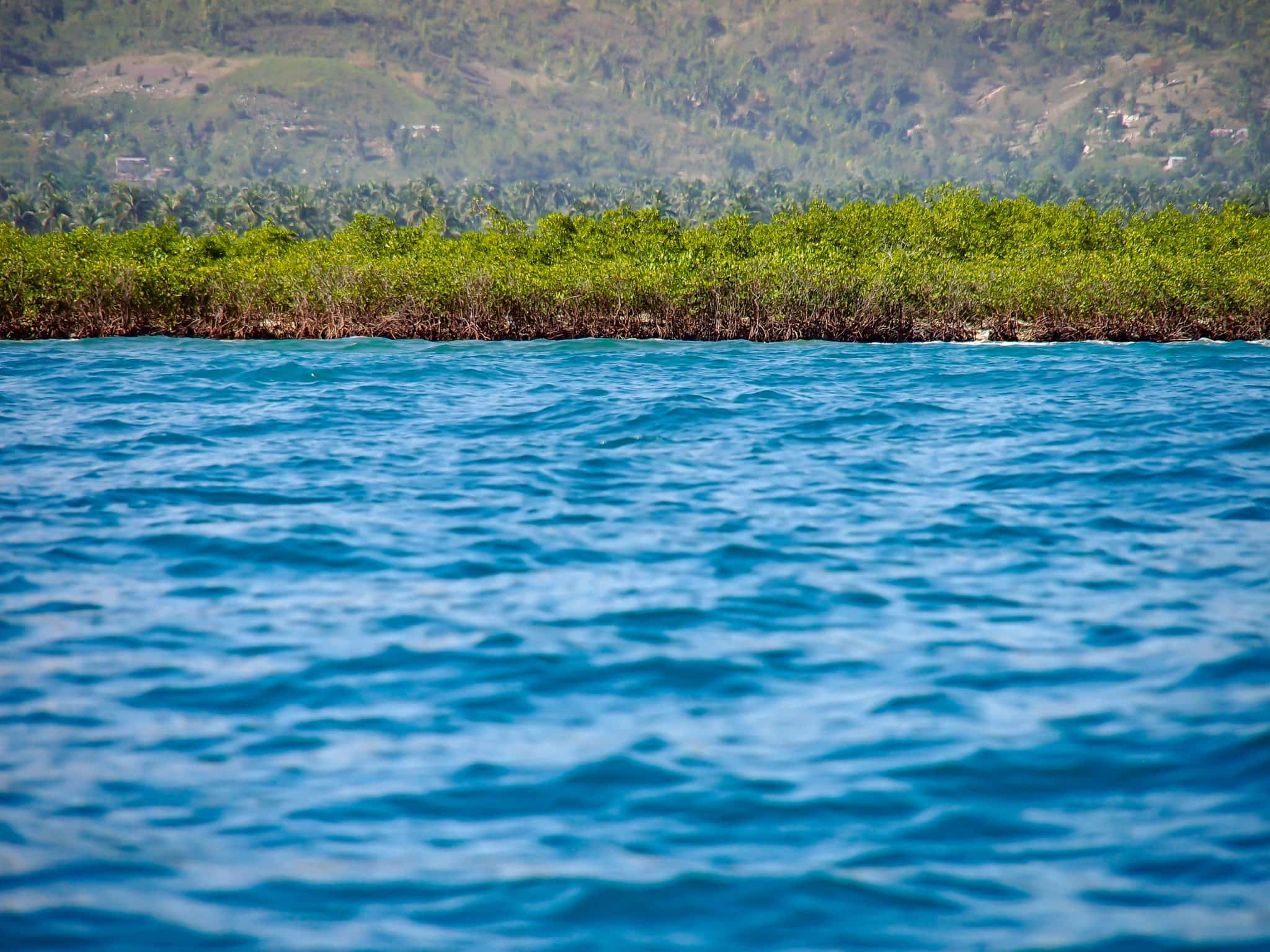Mighty Mangroves of Southern Haiti