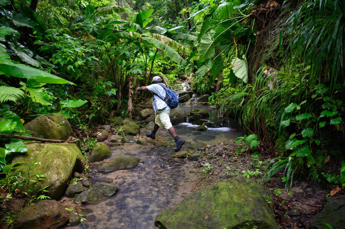 Scriber Adventure Tours Montserrat