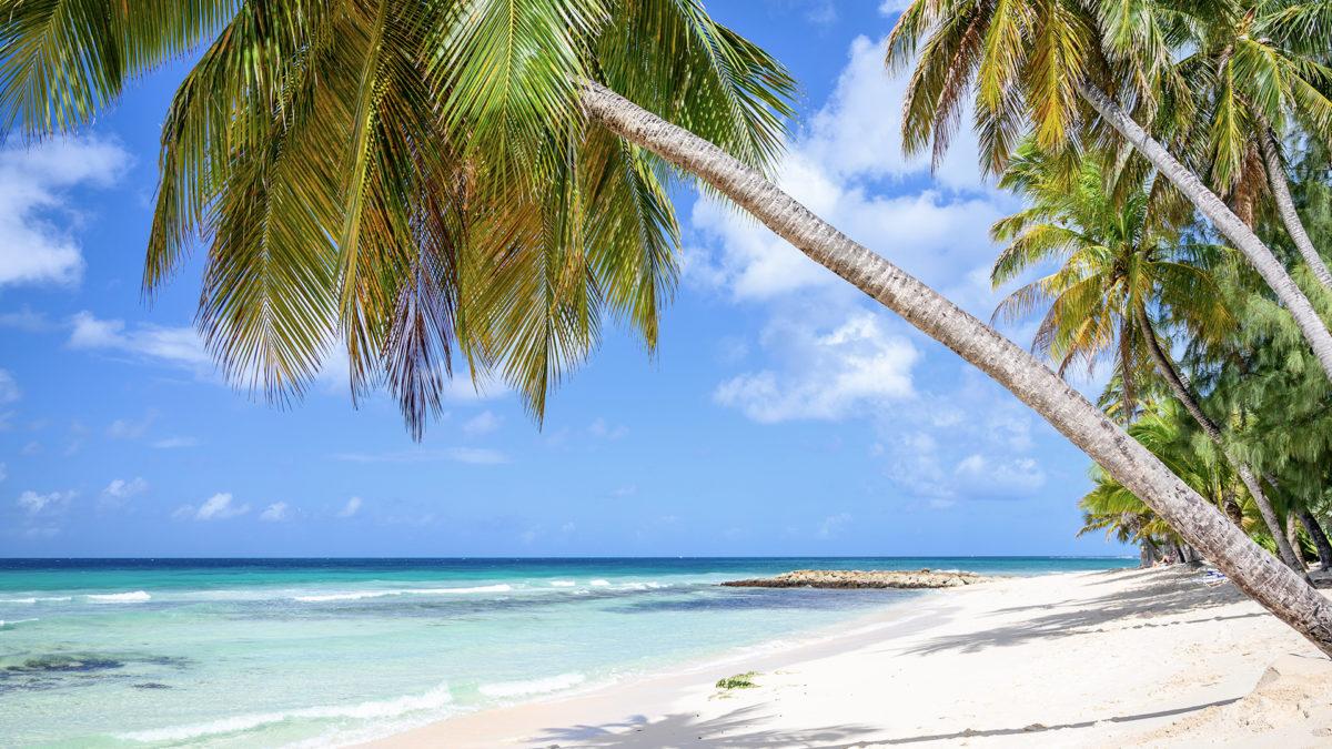 Barbados Beach Zoom Virtual Background